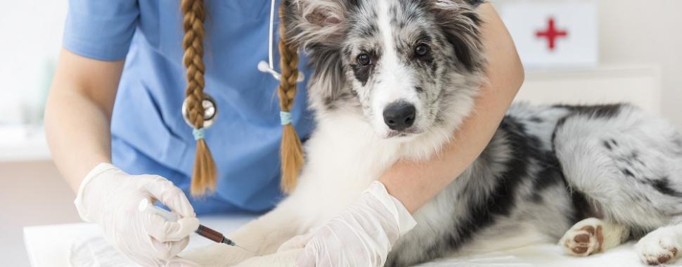 Vacinação Animal é Sinônimo De Cuidado Unama