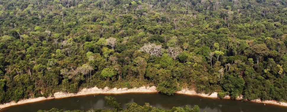 Brasil precisa priorizar a agenda ambiental para salvar a Amazônia/ Felipe Werneck/Ibama